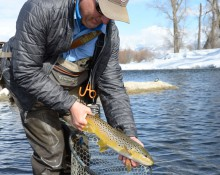 Taking brown trout from net